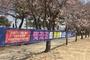 코로나19 확산방지…'갯골·옥구공원 벚꽃길 폐쇄'