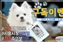 시흥시 지자체 최초 인턴犬(견) '구독이' 유튜브 이벤트